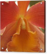 Orange Orchid 2 Acrylic Print
