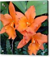 Orange Orchids Acrylic Print