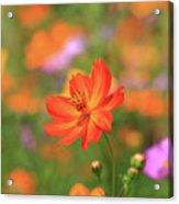 Orange Painted Landscape Acrylic Print