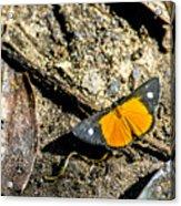 Orange Patch Acrylic Print