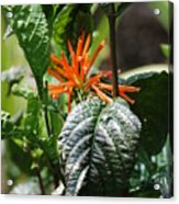Orange Plants Acrylic Print