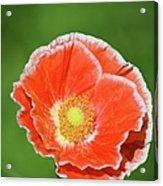 Orange Poppy 2 Acrylic Print