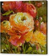 Orange Ranunculus Acrylic Print