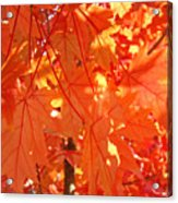 Orange Red Fall Leaves Autumn Tree Art Baslee Troutman Acrylic Print