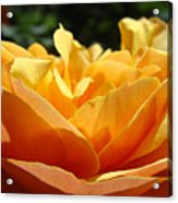 Orange Rose Art Prints Baslee Troutman Acrylic Print