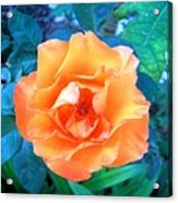 Orange Rose On Green  Acrylic Print