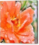 Orange Rose Raindrops Acrylic Print