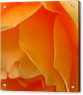 Orange Rose Side View Acrylic Print