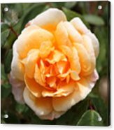 Orange Rose Square Acrylic Print