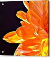 Orange Sherbet Acrylic Print