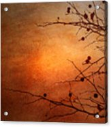 Orange Simplicity Acrylic Print