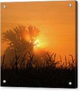 Orange Sky Rising Acrylic Print
