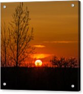 Orange Sunset Through The Trees Acrylic Print