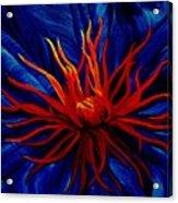 Orange Tango Acrylic Print