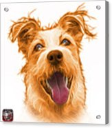 Orange Terrier Mix 2989 - Wb Acrylic Print