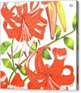 Orange Tiger Lilies Acrylic Print