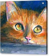 Orange Tubby Cat Painting Acrylic Print by Svetlana Novikova