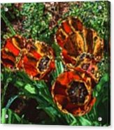 Orange Tulip Chrome Acrylic Print
