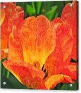 Orange Tulips With Brocade Acrylic Print