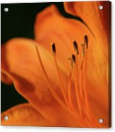 Orange Wave 3096 H_2 Acrylic Print