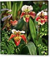 Orange White Orchid Acrylic Print