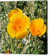 Orange Wildflowers Acrylic Print