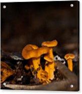 Orange Woodland Mushrooms Acrylic Print