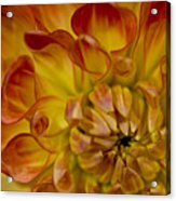 Orange-yellow Acrylic Print