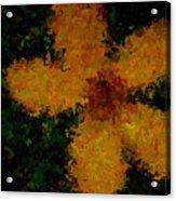 Orange-yellow Flower Acrylic Print