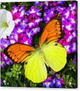 Orange Yellow Wings Acrylic Print