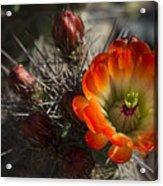 Orange You A Hedgehog  Acrylic Print