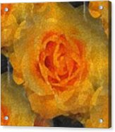 Orange You Lovely Acrylic Print