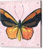 Oranged Birdwing Acrylic Print