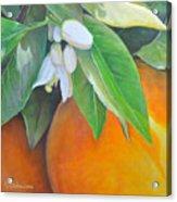 Oranges et Fleurs Acrylic Print