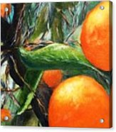 Oranges Extract Acrylic Print