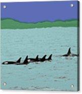 Orca Pod Acrylic Print