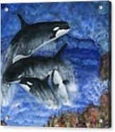 Orcas Family Frolicks Acrylic Print