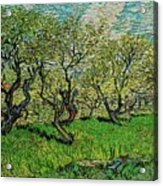 Orchard In Blossom Acrylic Print