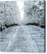 Orchard In White Acrylic Print