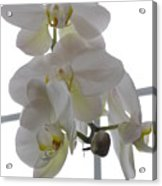 Orchid - 101 Acrylic Print