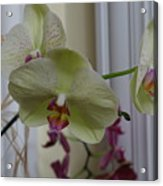 Orchid - 103 Acrylic Print