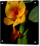 Orchid-0024 Acrylic Print
