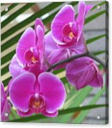 Orchid 1 Acrylic Print