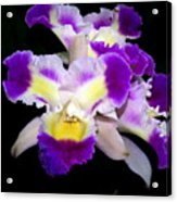 Orchid 13 Acrylic Print