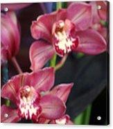 Orchid 14 Acrylic Print