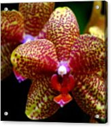 Orchid 15 Acrylic Print