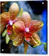 Orchid 17 Acrylic Print