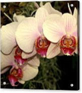 Orchid 19 Acrylic Print