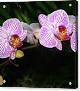 Orchid 2 Acrylic Print