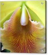 Orchid 21 Acrylic Print